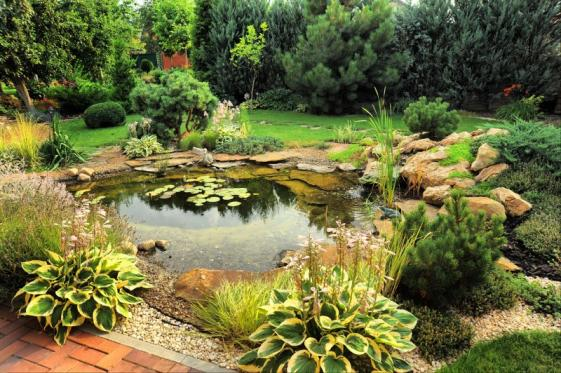 Paysagiste etang jardin
