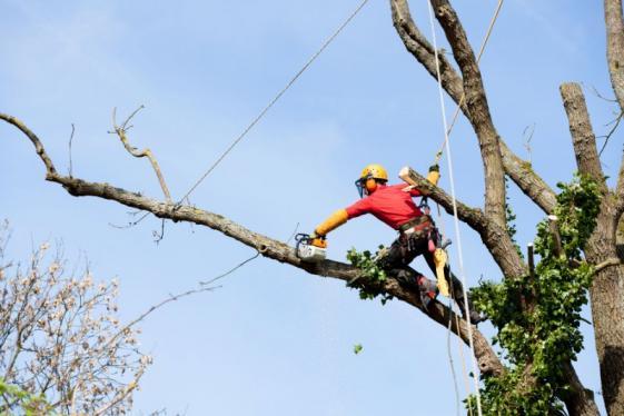 entreprise abattage arbres